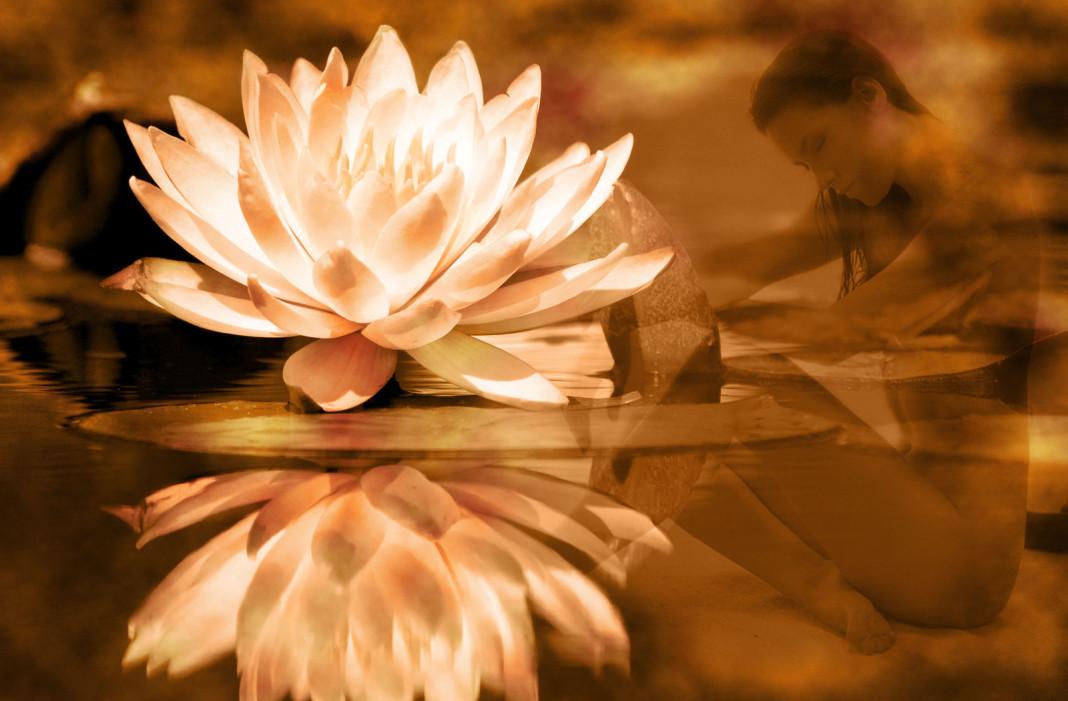 significato del fiore di loto