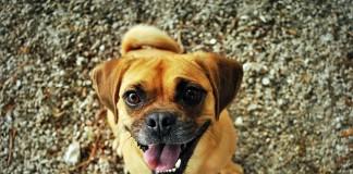 i cani riconoscono le emozioni