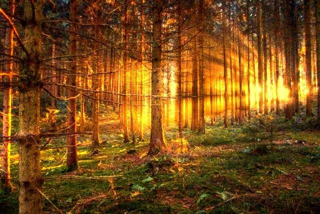 Natura vivere nel bosco