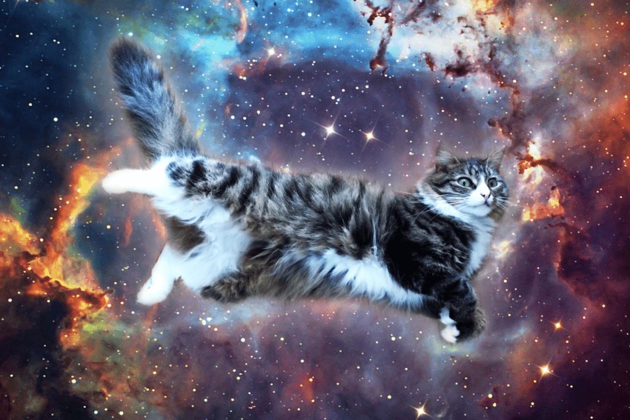 gatto campo energetico in astrale