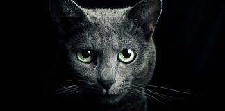 Il gatto protegge te e la tua casa dalle energie negative