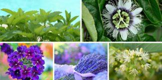 Goccioline per dormire: 5 integratori alimentari naturali per l'insonnia