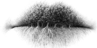 labbra radici alberi