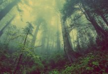 Legge Filippina imporrà a tutti gli studenti di piantare 10 alberi per diplomarsi