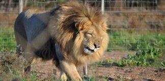 Progetto di Legge negli Stati Uniti Bandis l'Uso degli Animali nel Circo