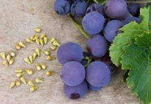 Estratto di semi di uva benefici
